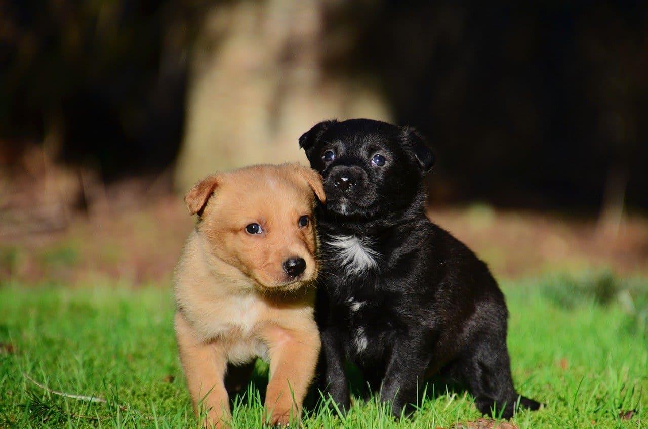 寄り添う犬2匹